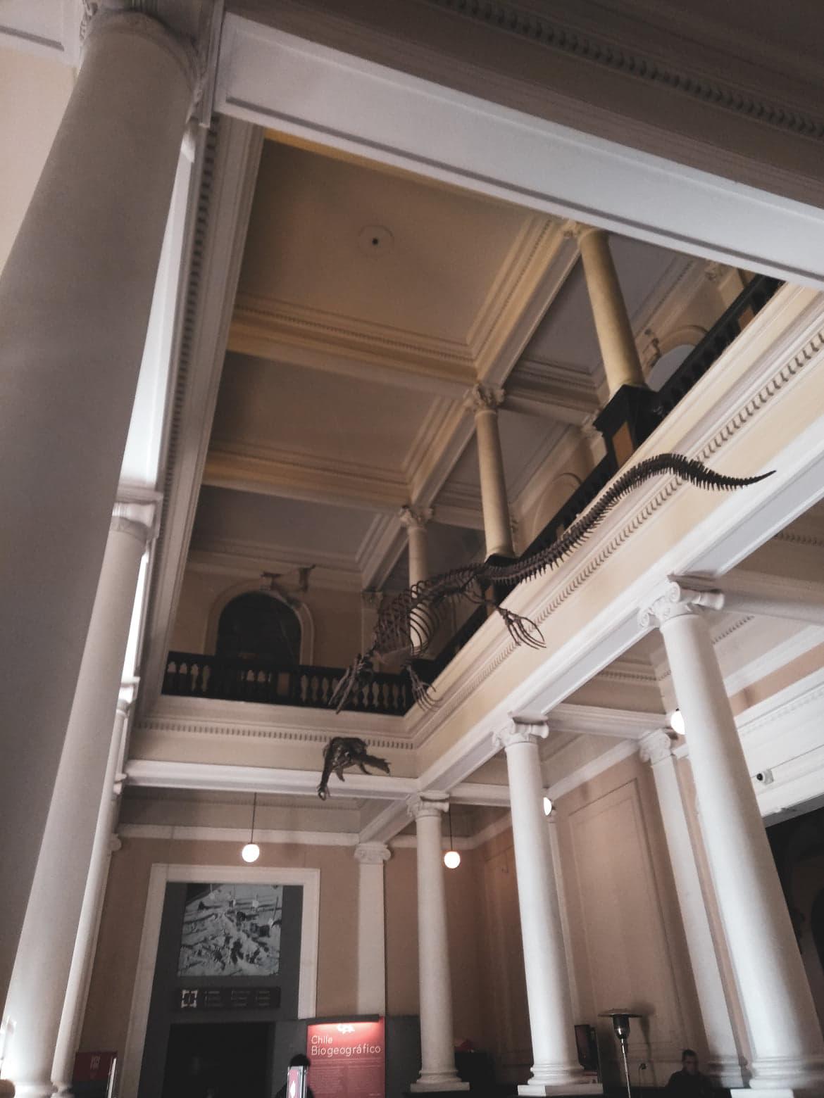 Hall do Museu Nacional de História Natural com um esqueleto animal suspenso